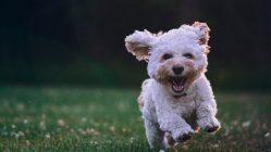 chien shanghai