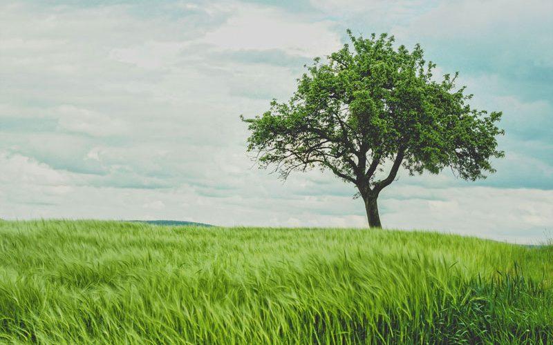environnement ecologique chine